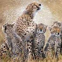 5 Days Selous Game Reserve-Mikumi National Park