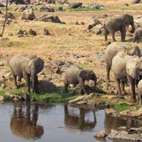 Tarangire, Serengeti, Ngorongoro, Lake Manyara Tour