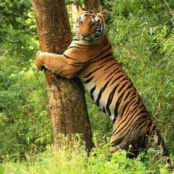 Panchmarhi - Kanha - Jabalpur 05Night - 06Days Tour
