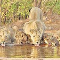 Ahmedabad Gir National Park Weekend Tour