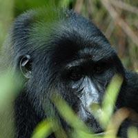 3 Days Rwanda Gorilla Trackng Tour