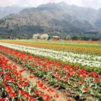 A Paradise Called Kashmir 7N-8D Package
