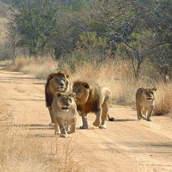 Gir Fun Tour