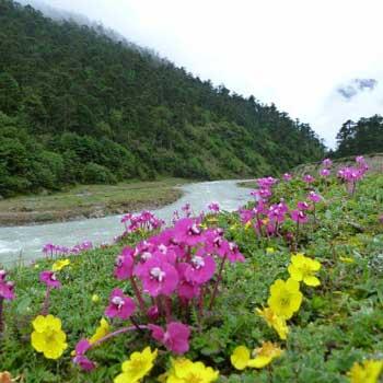 Yumthang Valley Tour