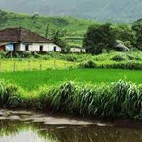 Stay Amidst Sugarcane Farms Tour