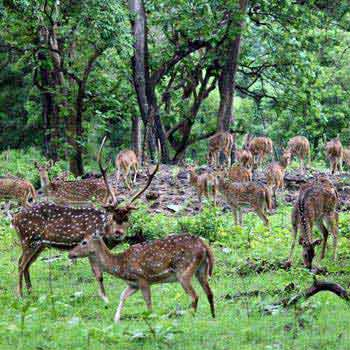 Madhumalai National Park Tour