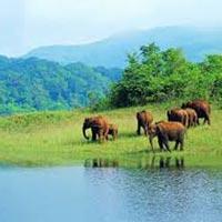 Kerala Periyar Tour