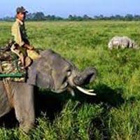 Amazing Kaziranga Wildlife Tour