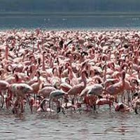 Full Day Lake Nakuru Day Trip Tour