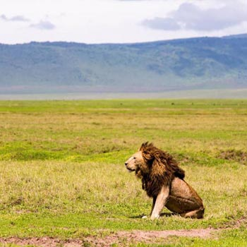 Kenya and Tanzania Epic Safari Tour