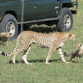 12 days Best of Kenya Safari Tour