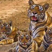 Short Escape to Ranthambore Tour