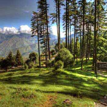 Mussoorie Dhanaulti Tour Packages