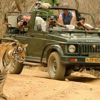 Rajasthan Wildlife Package- 5 Nights/ 6 Days Tour