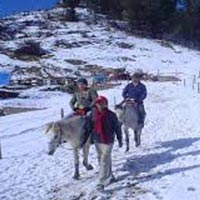Exotic Shimla Tour Package by VolvoTour