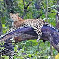 Panna Chitrakoot Wildlife Package