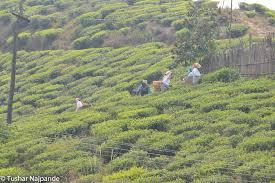 Guwahati, Kaziranga, Shillong, Cherapunjee & Guwahati Package
