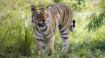 Manas Wild Life Tour