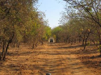 Gir Jungle Safari Tour