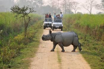 Day Trip Kaziranga National Park Tour