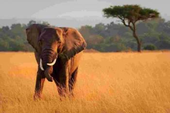 Wild Life Safari Tour