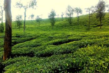Ooty Tour Package Ex Coimbatore