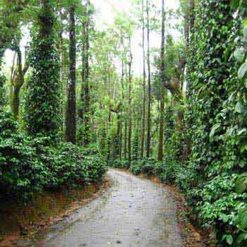 Coorg Tour Package Ex Bangalore
