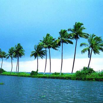 Kerala Coconut Experience Tour