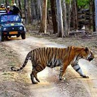 Caravan Getaway With Tadoba National Park Tour
