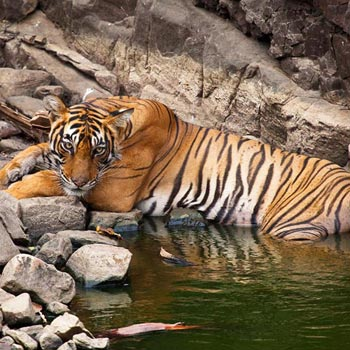 Tour package of Ranthambore