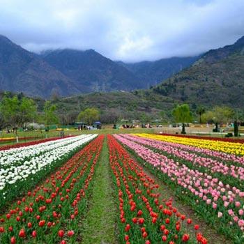Kashmir Trip Package - Srinagar - Gulmarg - Sonmarg - Pahalgam