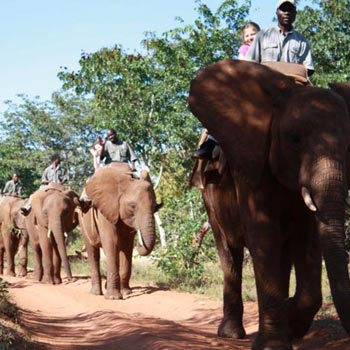 Elephant Viewing Tour