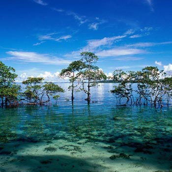 (3Night 4Days)  Andaman Island Tour