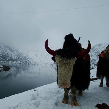Sikkim - Gududongmar - Yumthang - Tsomgo Lake Tour