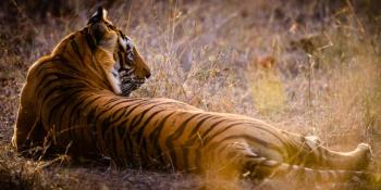 Golden Triangle Tour With Ranthambhore National Park Safari Tour