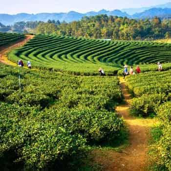 Assam Meghalaya Tour