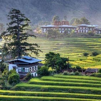 Thimphu- Punakha- Paro- Gangtey Tour