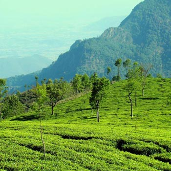 Nilgiri Holiday Tour Package