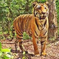 Bandhavgarh National Park 2N/3D Package