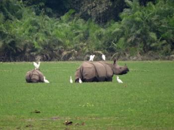 Assam Tour Package
