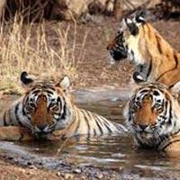 Sundarban Ac Deluxe Boat Package 1N/2D OR 2N/3D