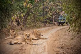 Safari Tour in Sasan Gir Gujrat