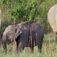 Corbett Wildlife Tour Package