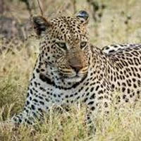 Brocher For Ranipur Zone Safari (Leopard Safari)  Tour