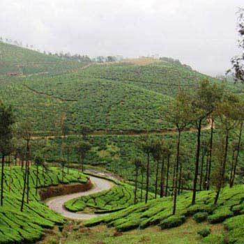 Kerala Package - 7 Days