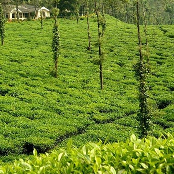 2 Nights 3 Days Coorg Package