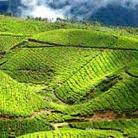 Nainital and Ranikhet Tour Packages