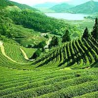 05 Night 06 Days Darjeeling - Namchi - Gangtok Tour Package