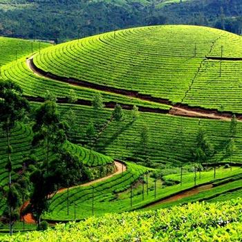 Kerala Package 3Night 4Days