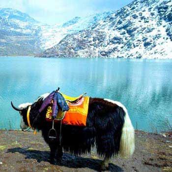 Sikkim Goechela Trek - 12 Nts / 13 Days